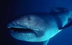 Sharknado Three:The Megamouth