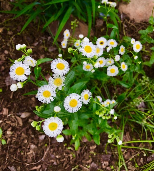 Beautiful flowers begin to bloom, proving spring has begun.